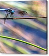 Dragonfly Walking A Tightrope Canvas Print