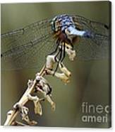 Dragonfly Wing Details Canvas Print