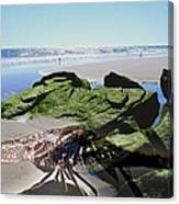 Dragonfly's Day At The Beach Canvas Print