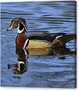 Drake Wood Duck Canvas Print