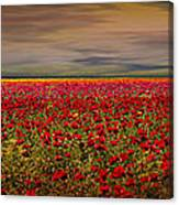 Drama Over The Flower Fields Canvas Print