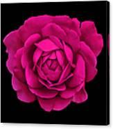 Dramatic Hot Pink Rose Portrait Canvas Print