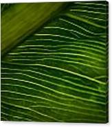 Dramatic Leaf Abstract Canvas Print