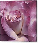 Dramatic Plum Rose Flower Canvas Print