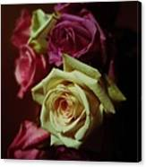 Dramatic Purple And Yellow Roses Canvas Print