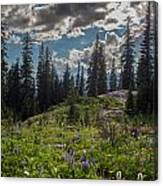 Dramatic Rainier Flower Meadows Canvas Print