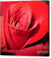 Dramatic Red Rose  Canvas Print