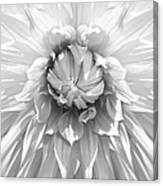 Dramatic White Dahlia Flower Monochrome Canvas Print