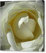 Dramatic White Rose 2 Canvas Print