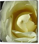 Dramatic White Rose 3 Canvas Print