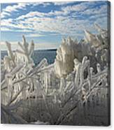 Draped In Icy Beauty Canvas Print