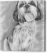 Drawing Of A Shih Tzu Canvas Print
