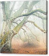 Dream Oak II Color 1 Canvas Print