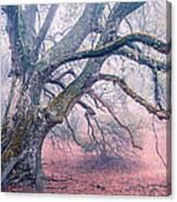 Dream Oak II Color 2 Canvas Print