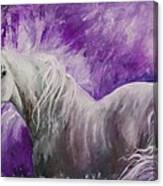 Dream Stallion Canvas Print