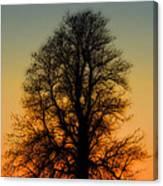 Dream Tree At Sunset Canvas Print