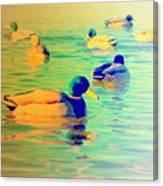 Ducks Dreaming Of Dreaming Ducks  Canvas Print