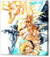 Dreaming Of A Seahorse  Canvas Print