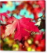 Dreaming Of Maple Jewels Canvas Print