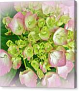Dreaming Of Pink Hydrangeas Canvas Print