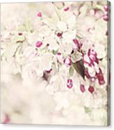 Dreaming Of Spingtime Blossom Canvas Print