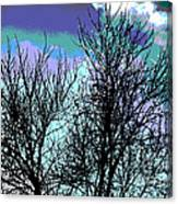 Dreaming Of Spring Through Icy Trees Canvas Print