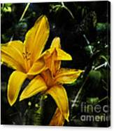 Dreams Of A Day Lily Canvas Print