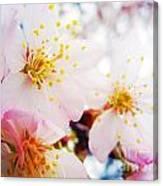 Dreamy Blossom Canvas Print