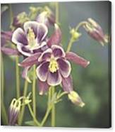 Dreamy Columbine Flowers Canvas Print