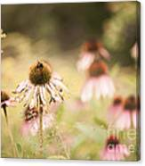 Dreamy Coneflowers Canvas Print