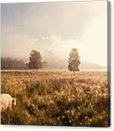 Dreamy Fields. The Trossachs. Scotland Canvas Print