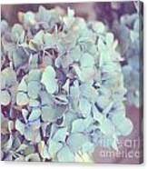 Dreamy Image Of Hydrangea Flower Canvas Print