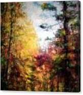 Dreamy Nature Walk Canvas Print