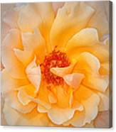 Dreamy Orange Rose Canvas Print
