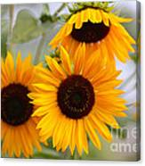 Dreamy Sunflower Day Canvas Print