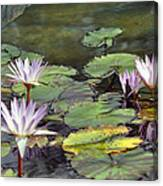 Dreamy  Water Lillies Canvas Print