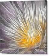 Dreamy Waterlily Canvas Print