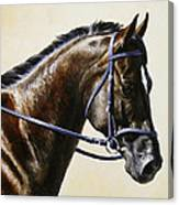 Dressage Horse - Concentration Canvas Print