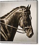 Dressage Horse Old Photo Fx Canvas Print