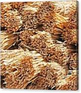 Dried Grass Canvas Print