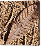 Dried Leaf Canvas Print