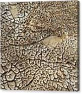 Dried Mud Pan It Time Of Drought Canvas Print