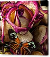 Dried Rose And Butterfly Canvas Print