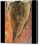Dried Salted Codfish Back Canvas Print