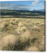 Dried Shrubs In Late Winter Carrizo Canvas Print