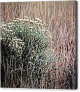 Dried Wildflowers Canvas Print