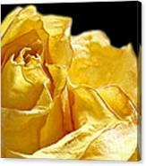Dried Yellow Rose II Canvas Print