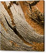 Driftwood 2 Canvas Print