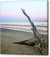 Driftwood At Dusk Canvas Print