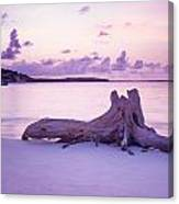 Driftwood At Sunset Canvas Print